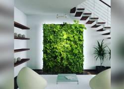 Стабилизированные растения
